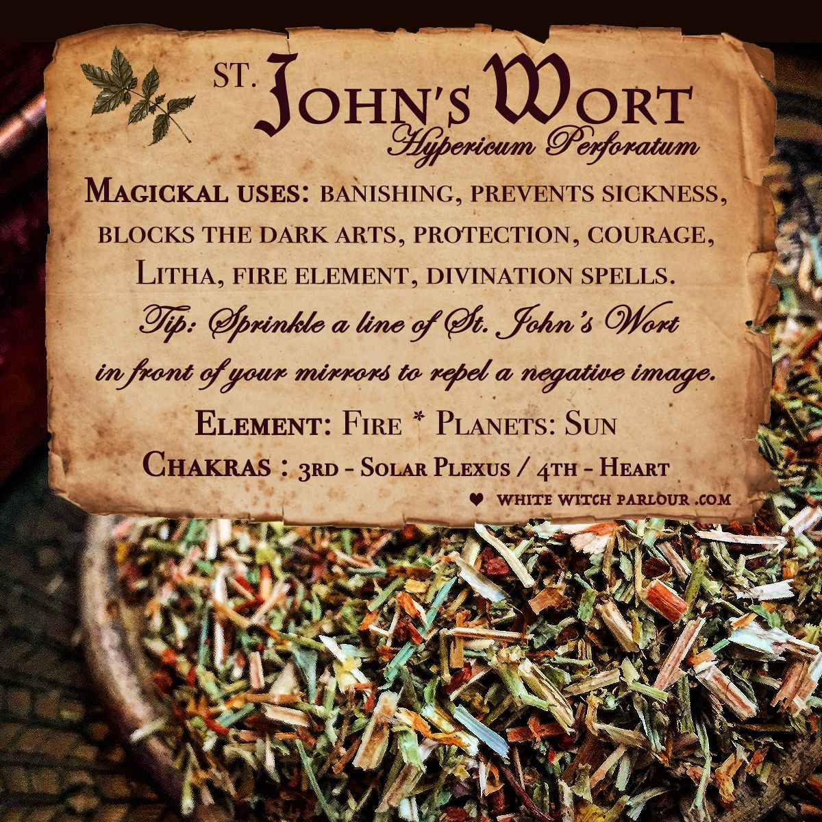 St. John's Wort, herbs, botanical, spells, witchcraft, occult, metaphysical, magick, enchanted, protection, witch, solar plexus, banishing, fire, apothecary. www.whitewitchparlour.com