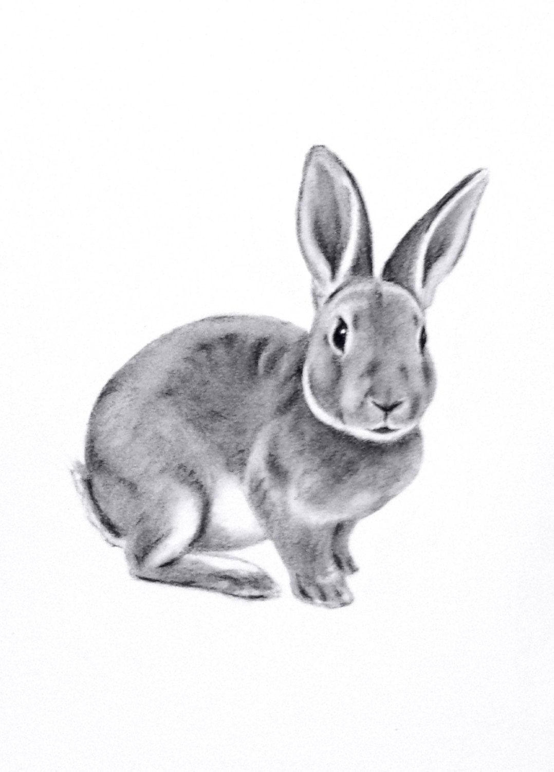 popular items for rabbit drawing on etsy