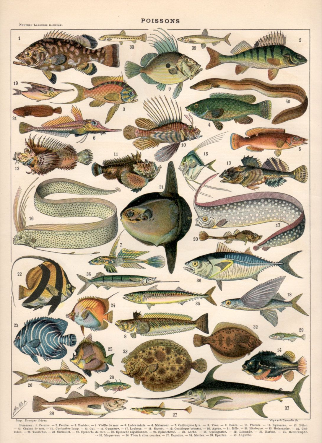 Freshwater fish england - Fish Antique Print 1897 Vintage Lithograph Poisson Poster Freshwater Fish Print Saltwater Fish Aquarium Fish Species Angelfish