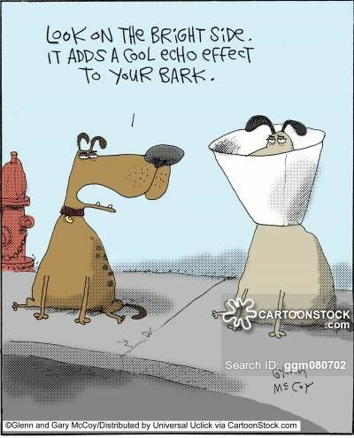 Dog Cone Cartoons And Comics Funny Pictures From Cartoonstock