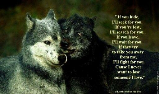 Husky Frases: Wolf, Lone Wolf Quotes, Wolf Quotes