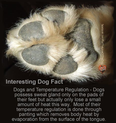 Interesting Dog Fact. You should always be aware of the heat and ...