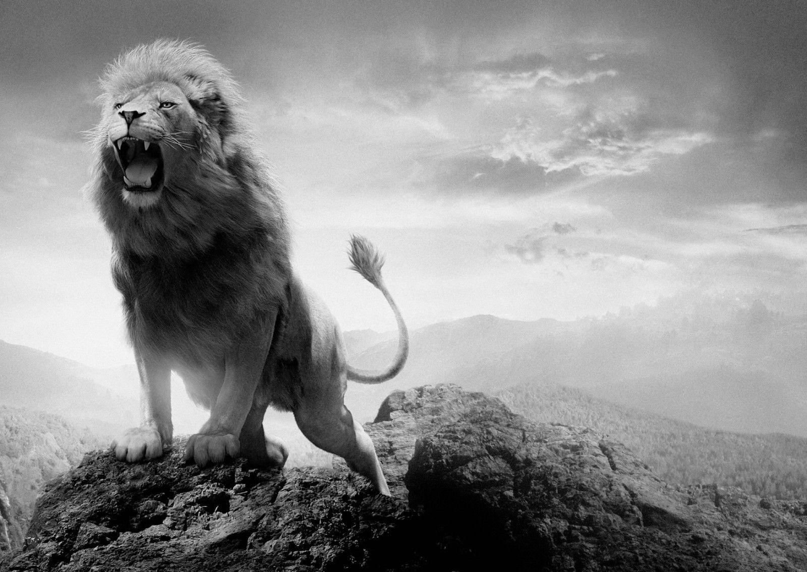 lion mountain #landscape box #canvas art print black & #white