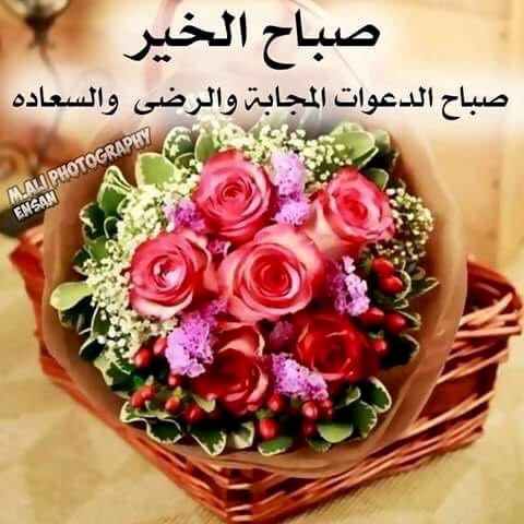 Desertrose Good Morning ص ب اح ال خ ي ر ص ب ـــــــاااح كم ن دي م ث ـل ق ل وب کـــــــم أ س أ ل ال Garden Crafts Diy Flowers Coming Up Roses