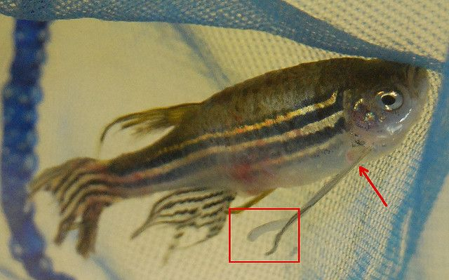 prevention and treatment of fish diseases and parasites here fishy