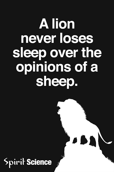 A lion never loses sleep over the opinions of a sheep ...
