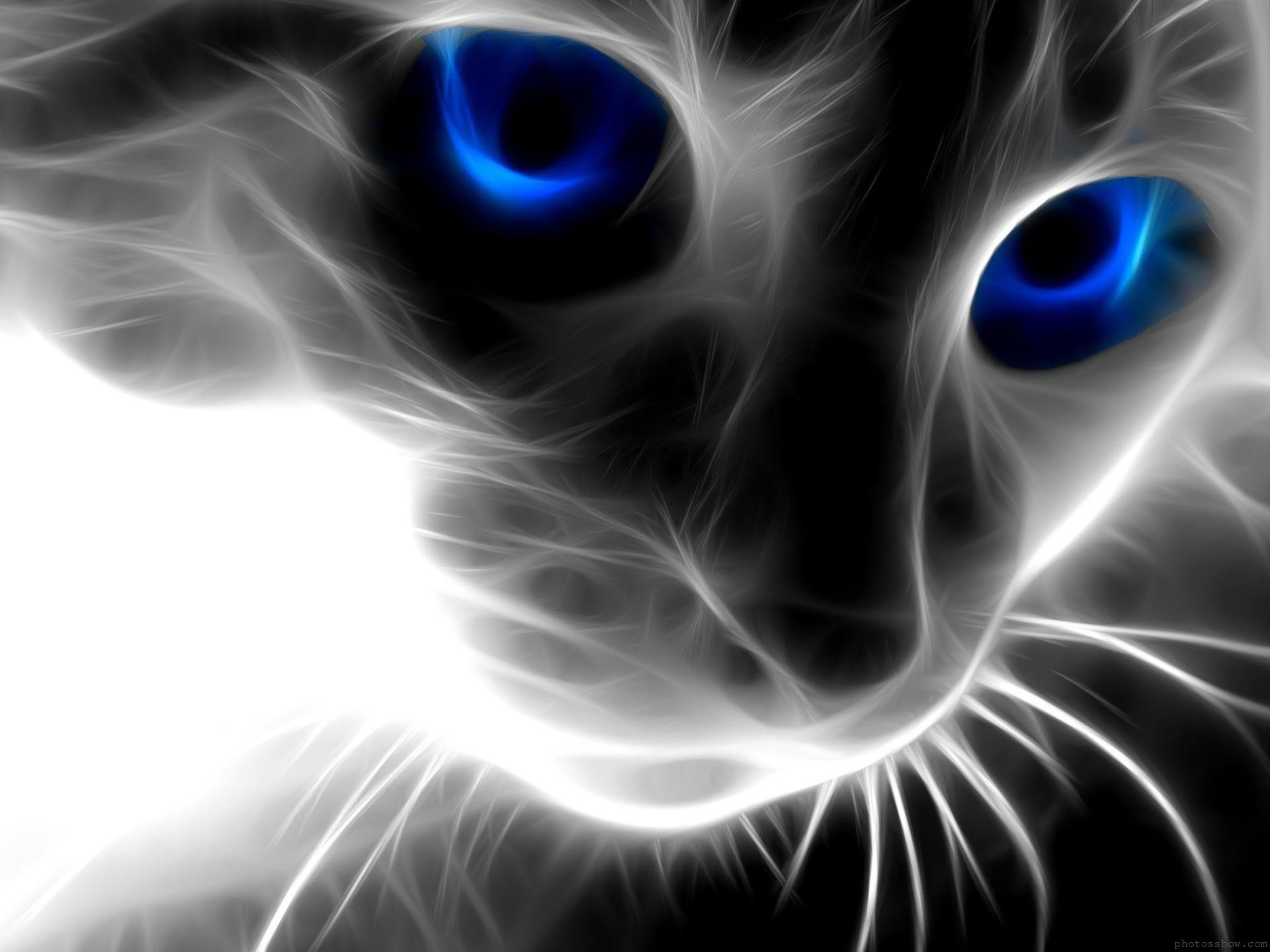 Black Cat With Blue Eyes High Definition Wallpaper