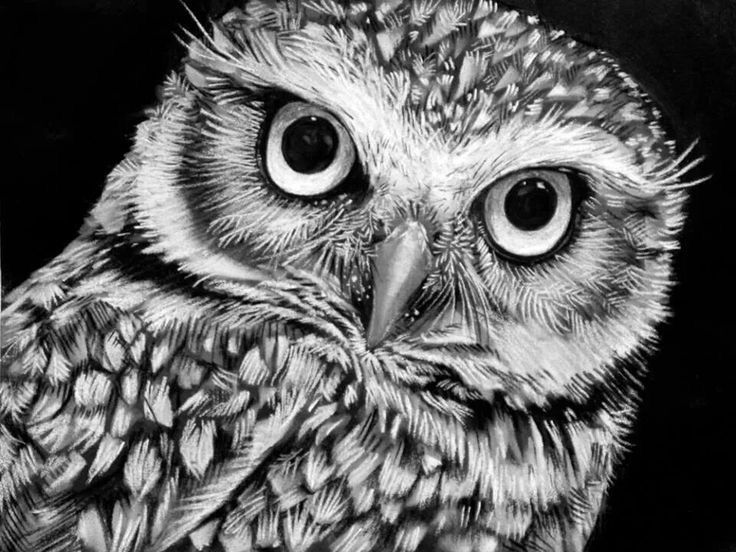 Pin By Morgan Eddy On White Charcoal Drawings In 2018 Pinterest