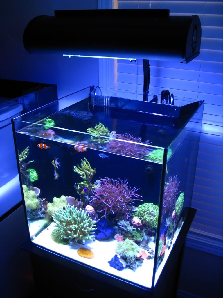 November ntotm jgross4 39 s clean sps solana reef central for Community saltwater fish