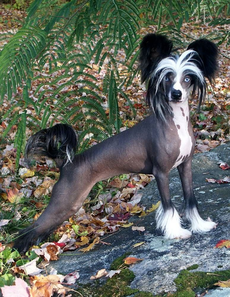 What Would You All Do If You All Got To Take This Dogi Home Dog Breeds Best Hypoallergenic Dogs Hypoallergenic Dog Breed