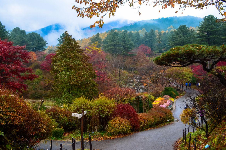 South Korea Morning Calm | Photograph The Garden of Morning Calm ...