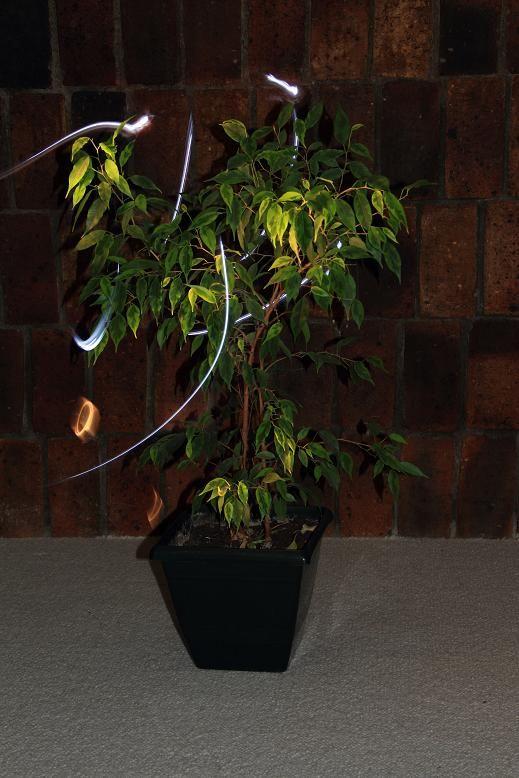 Essai LightPainting sur une plante-2012