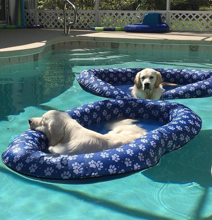 Best Pool Accessories For Your Summer Pool Party Pool Accessories Dog Pool Swimming Pool Accessories