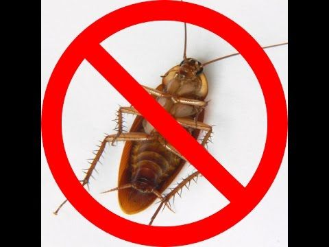 See how I got rid of roaches in my apartment in as little as 7 ...