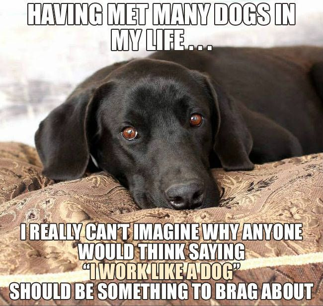 Pin By Mesa Veterinary Clinic Paws On Crazy Pictures Funny Dogs Funny Dog Pictures Puppy Mom
