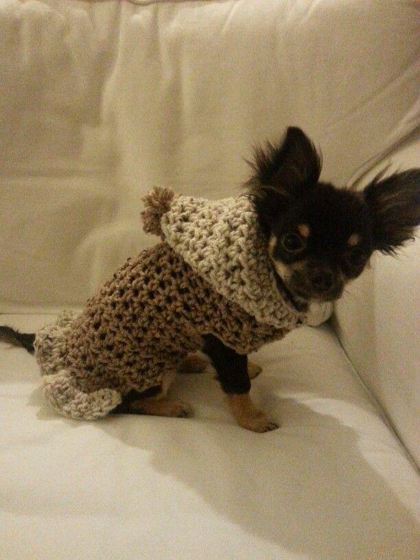 Truitje Gehaakt Voor Onze Chihuahua Haken Diy Clothes Sewing En