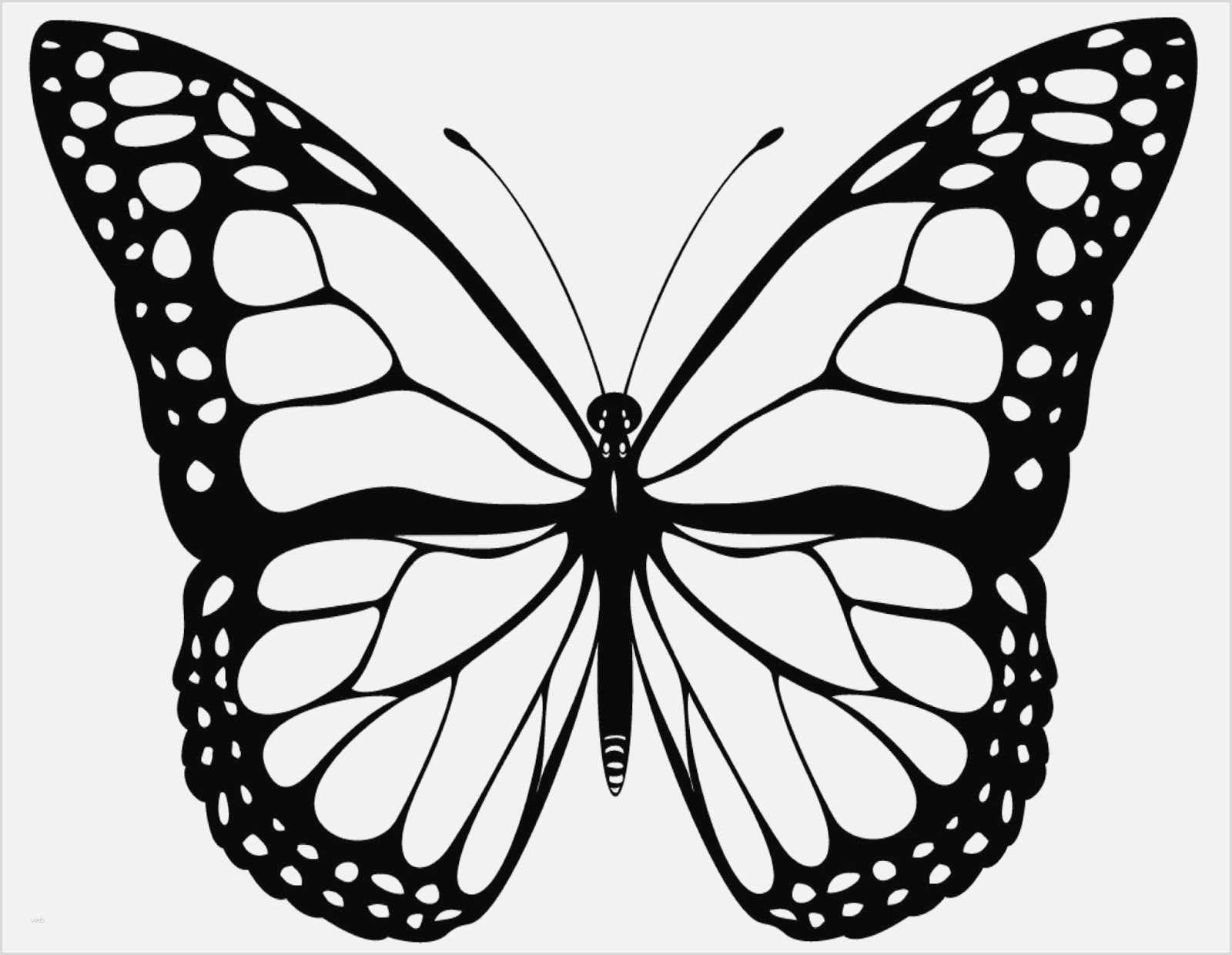 Schmetterling Vorlage Malen 596 Malvorlage 2