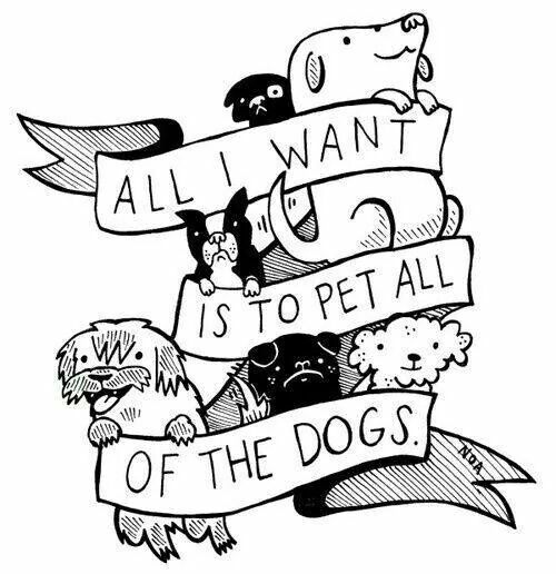 All I Want Is To Pet All The Dogs Dog Love Dog Quotes Cute Animals