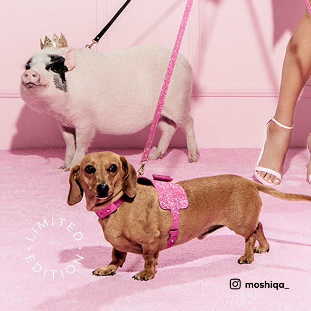 Bow Wow Dog Harness Dog Harness Bow Wow Dogs