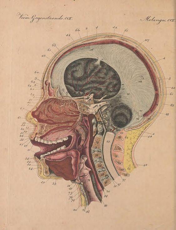 Anatomy Of The Sense Of Smell Bilderbuch Fr Kinder 1802 Star