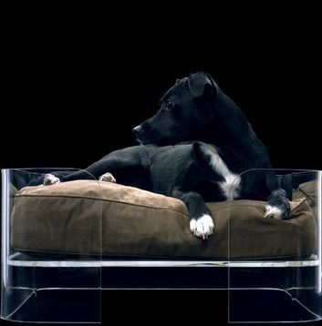 Wowbow London Dog Bed Cutedogs Dogphotos Dogs Dogbed Designer Dog Beds Dog Bed Modern Dog Bed Luxury