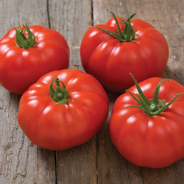 Marbonne F1 Tomato Seed Tomato Seeds Chicken Garden 400 x 300