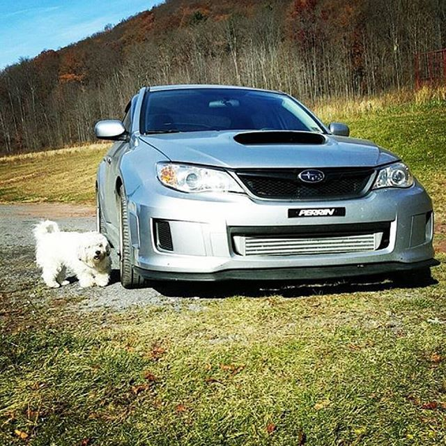 Even Dogs Dig Subaru Repost And Photo Credit Indigozerby