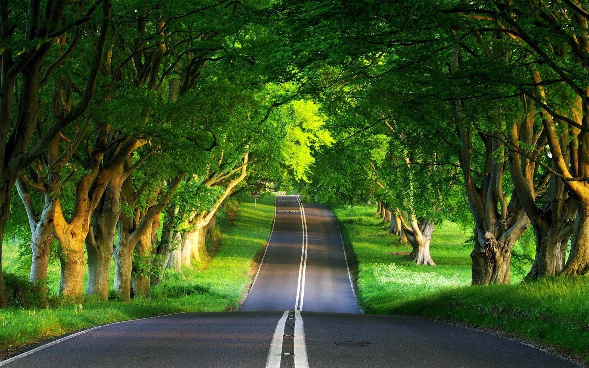 Green Road A Real Running Hidden Treasure Nature Desktop Green Nature Wallpaper Nature Desktop Wallpaper