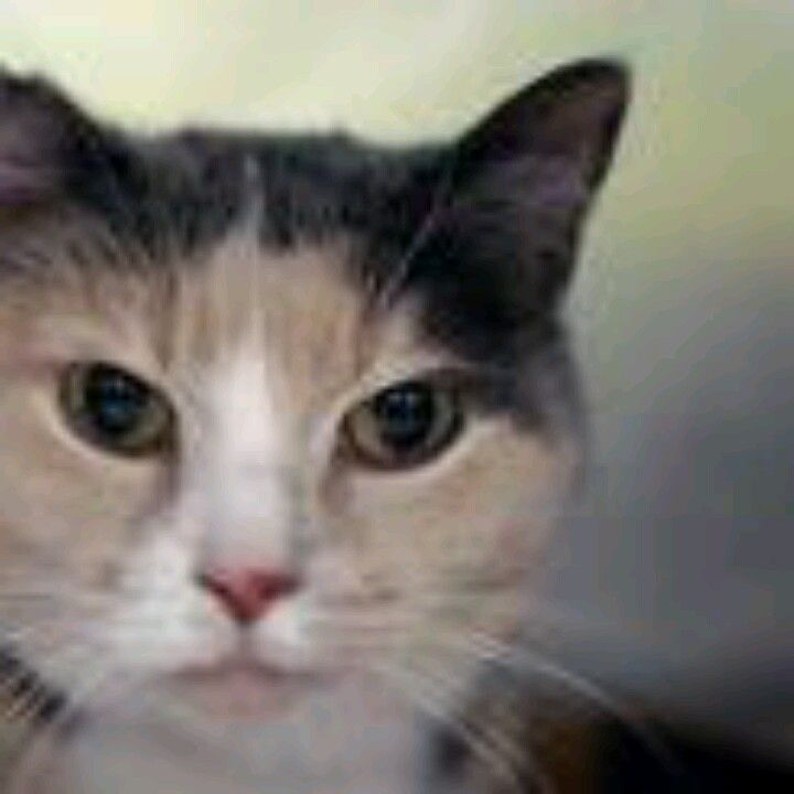 Brooklyn NY. Gia. Spayed 8 year old female. Dies in a.m. See Pets on Death Row- Urgent Death on fb.