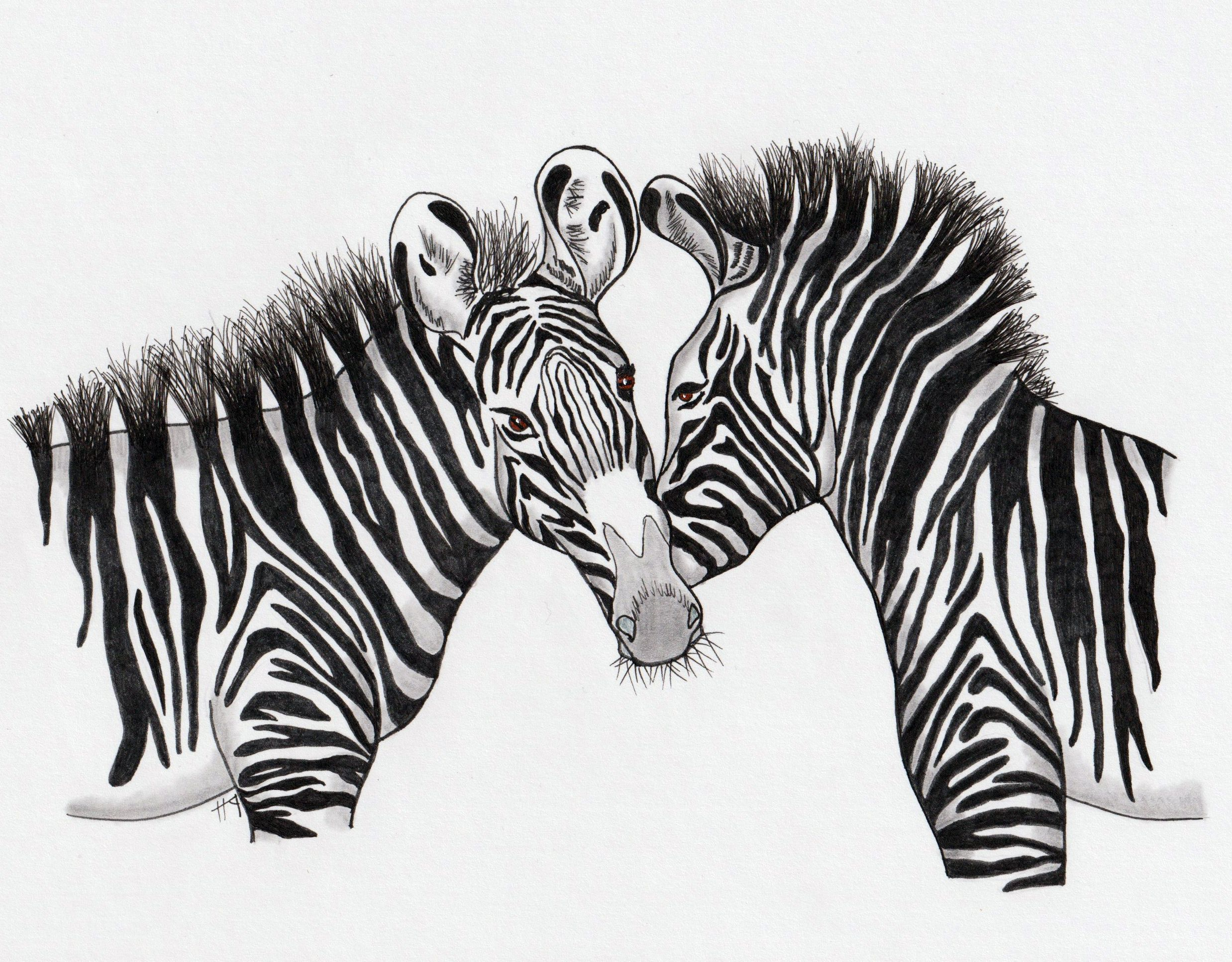 Zebra Pencil Drawing Images In 2020 Drawing Images Pencil Drawing Images Pencil Drawings