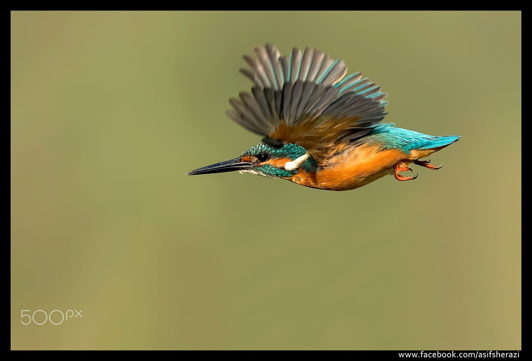 Beauty of The Nature - Common Kingfisher Multan, Pakistan.