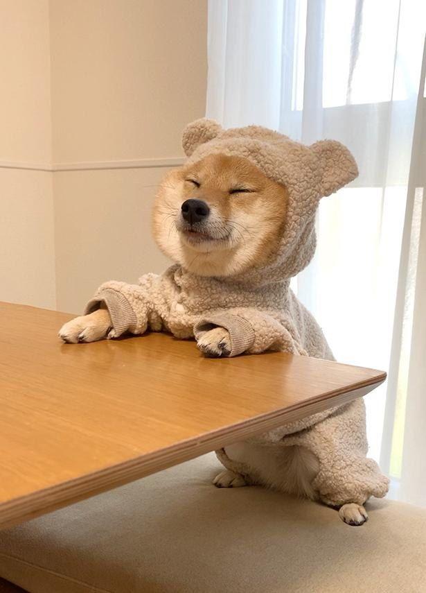 画像2 36 癒やし効果抜群 10万人超のファンを魅了する 豆柴 はなちゃんの 寝姿コレクション ウォーカープラス かわいいペット 可愛い犬 可愛いワンちゃん