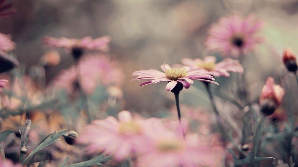 Fondo De Flores Vintage: Imagen Para Fondo De Pantalla Vintage Flores Publicado El