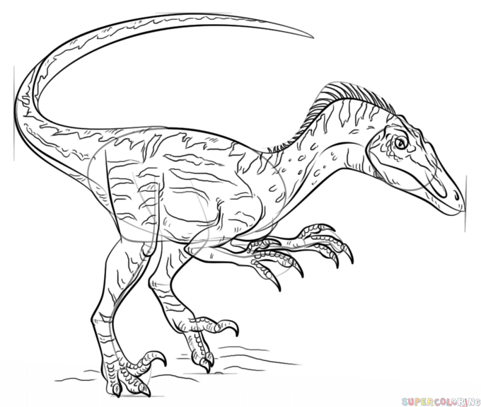 How To Draw A Velociraptor Step By Step. Drawing Tutorials