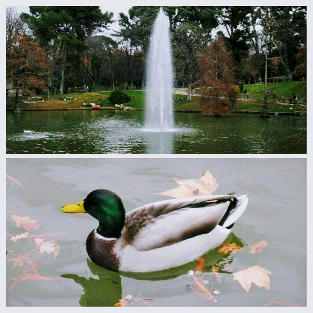 Parque Del Retiro Madrid Seguici Su Itinerariodiviaggio Altervista Org Madrid Spagna Spain Travel Trip Viaggi Viaggiare Viajes Parco Animals