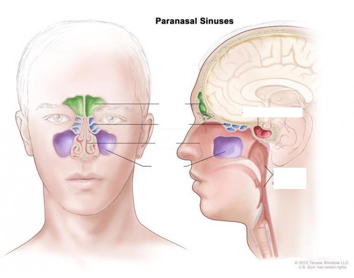 كم عدد الجيوب الأنفية في الأنسان موسوعة Mens Sunglasses Mirrored Sunglasses Men Mirrored Sunglasses