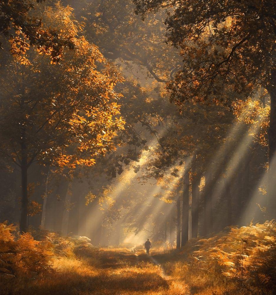 Rays Of Light Nature Photography Autumn Landscape Landscape Photography