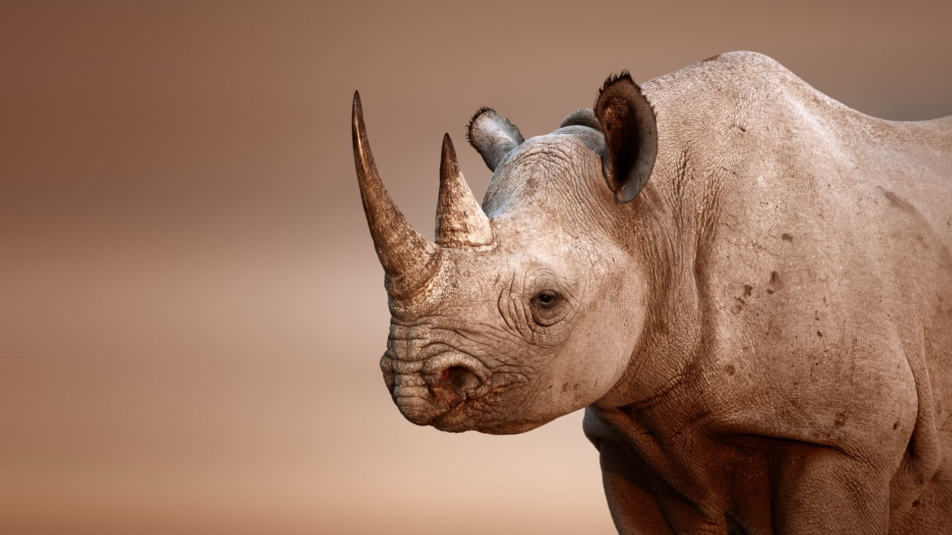 fantastic hd rhinoceros wallpapers | wallpapers | pinterest