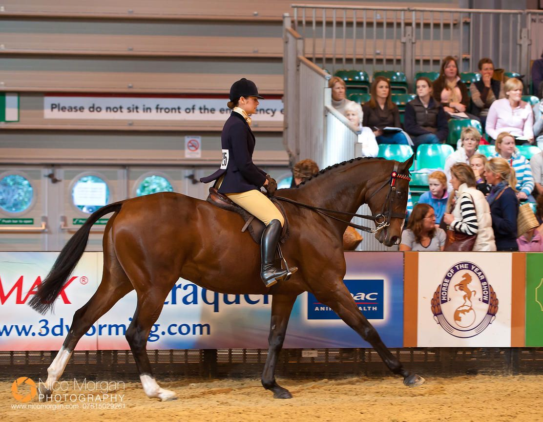 The Retrained Racehorse Class, Horse of the Year Show 2010