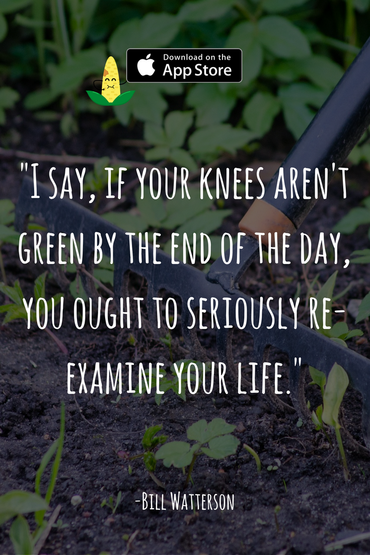 My Favorite Quote About Gardening Feel Free To Download Our Cute Sticker Pack For Imessage Garden Quotes Nursery Near Me Sayings