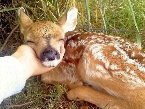 TrashySoda Cute baby animals