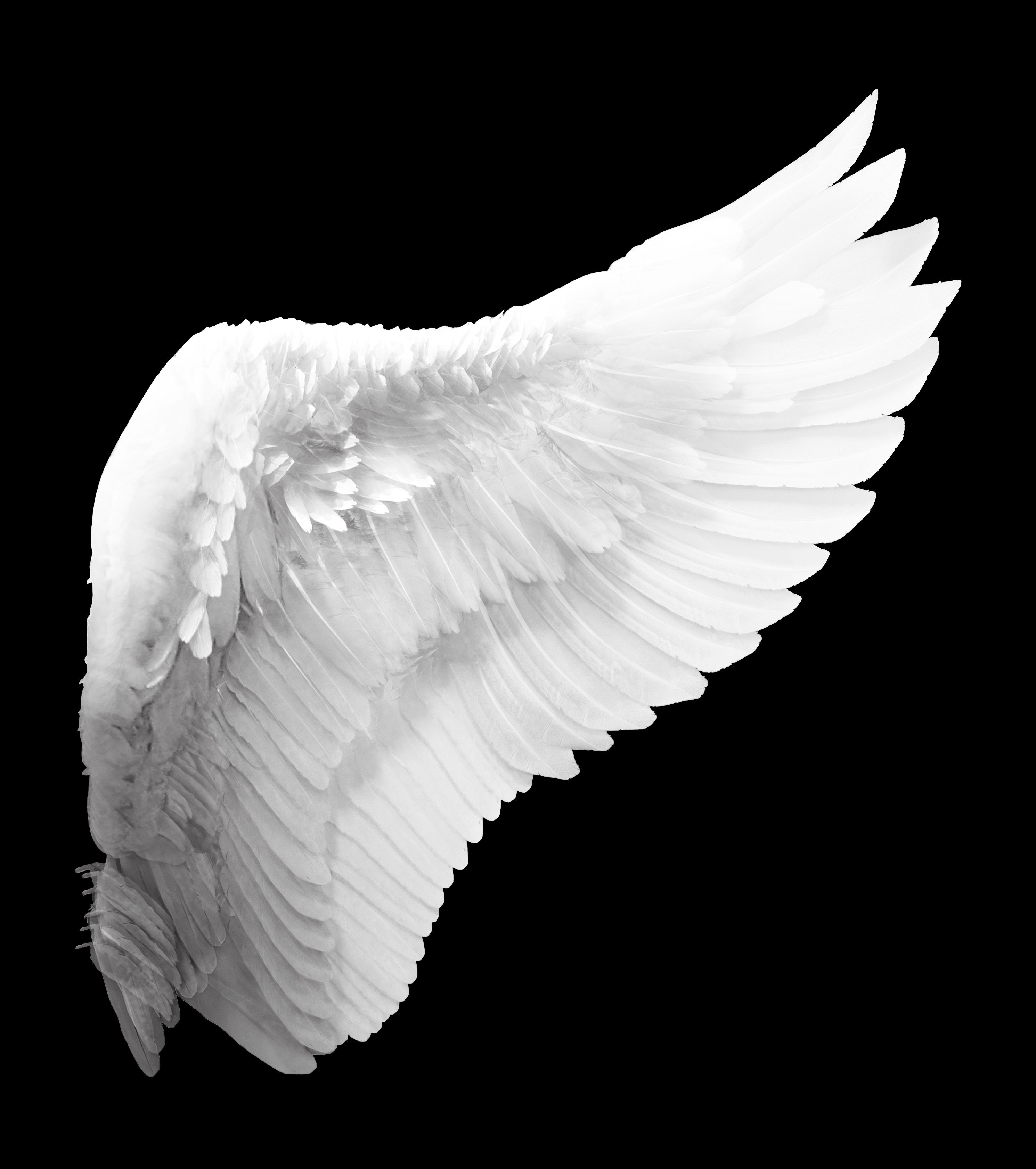 angel wings black background - photo #6