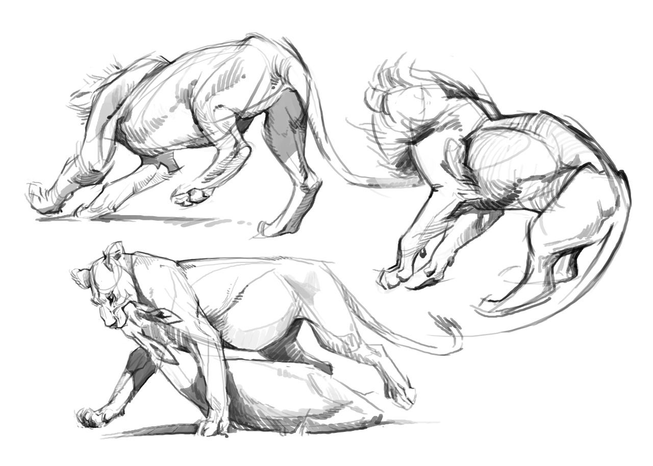 Lions Because They Are Such Big Stocky Rectangles Are