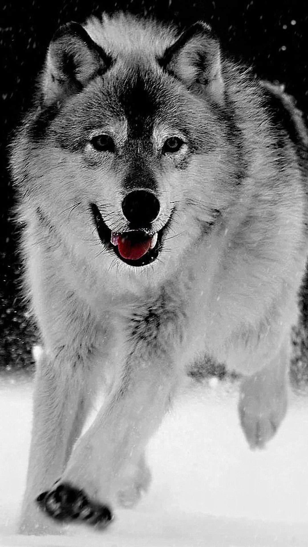 Wolf Wallpaper for iPhone (72+ images) Wolf wallpaper