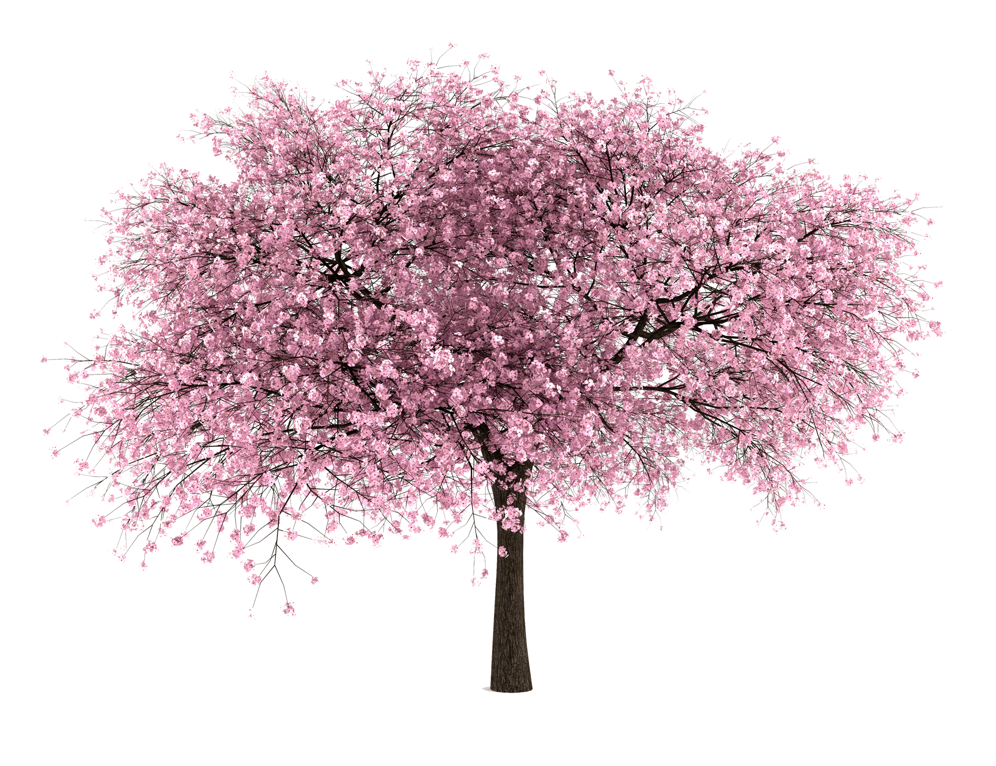 20 Tree Png Images Free Cutouts For Architecture Landscape Interior Renderings Cherry Blossom Tree Tree Photoshop Blossom Trees