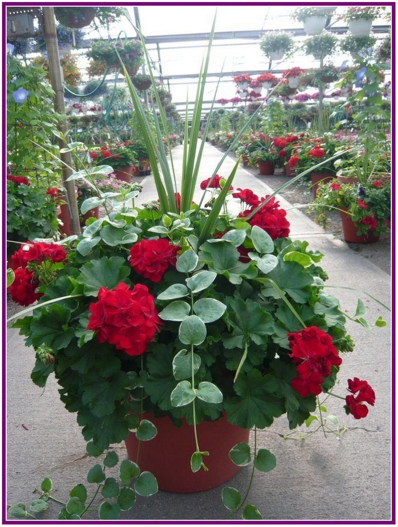 26 Stunning And Beautiful Flowers For Outdoor Pots Ideas 400 x 300