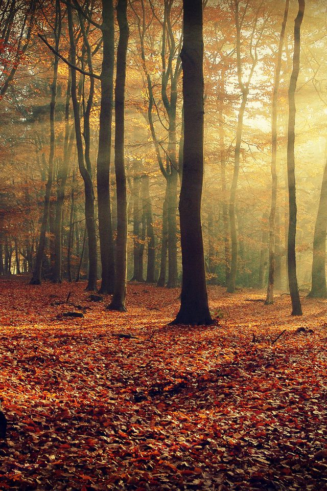 Wallpaper For Phones Fall Autumn Wallpaper Forest Wallpaper Desktop Background