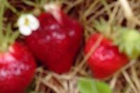 Scott's Annual Strawberry Festival 23 May - 24 May