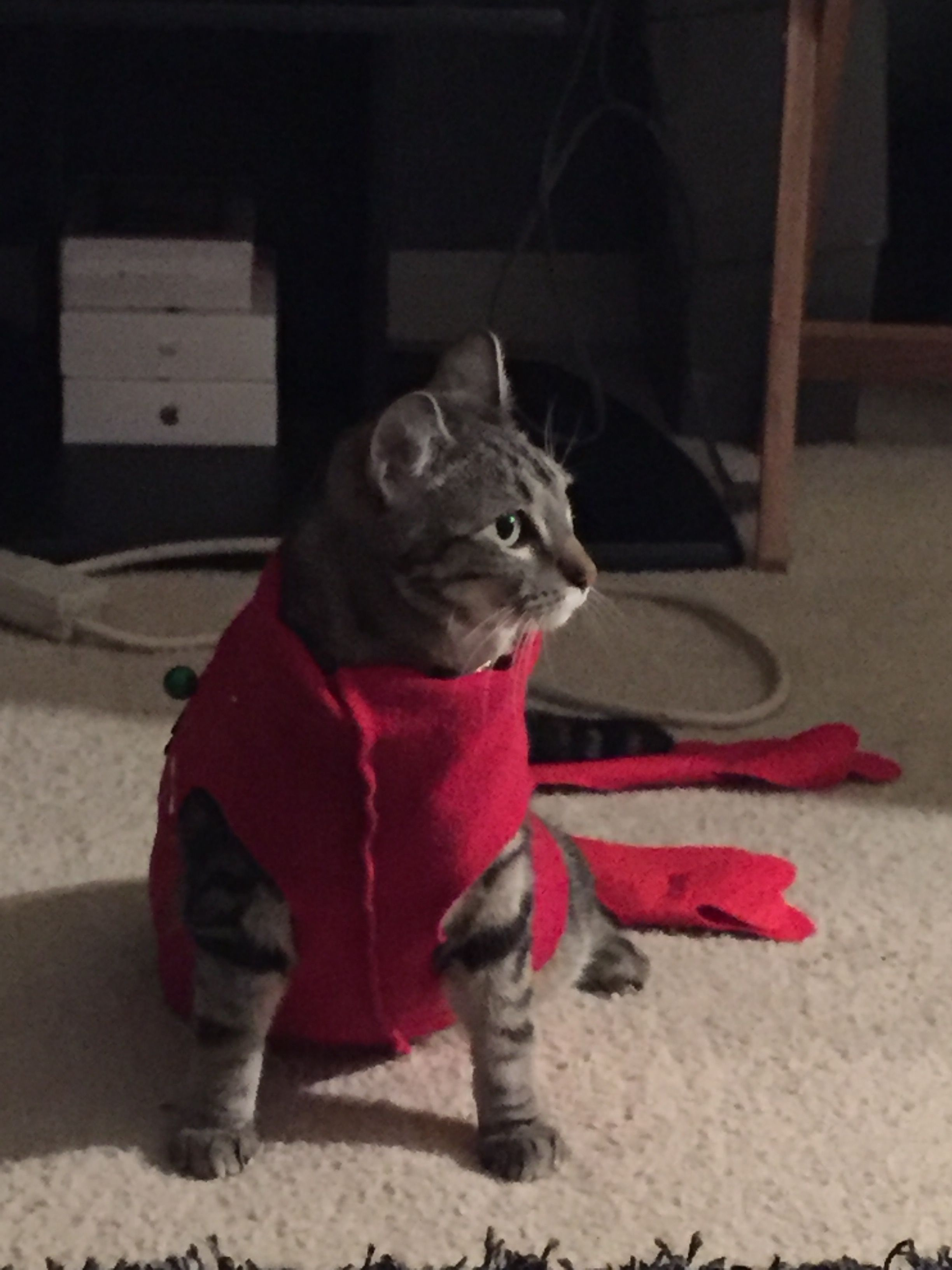 Pin by Sharmaine Singleton on Ugly Christmas sweater for Cat DIY ...
