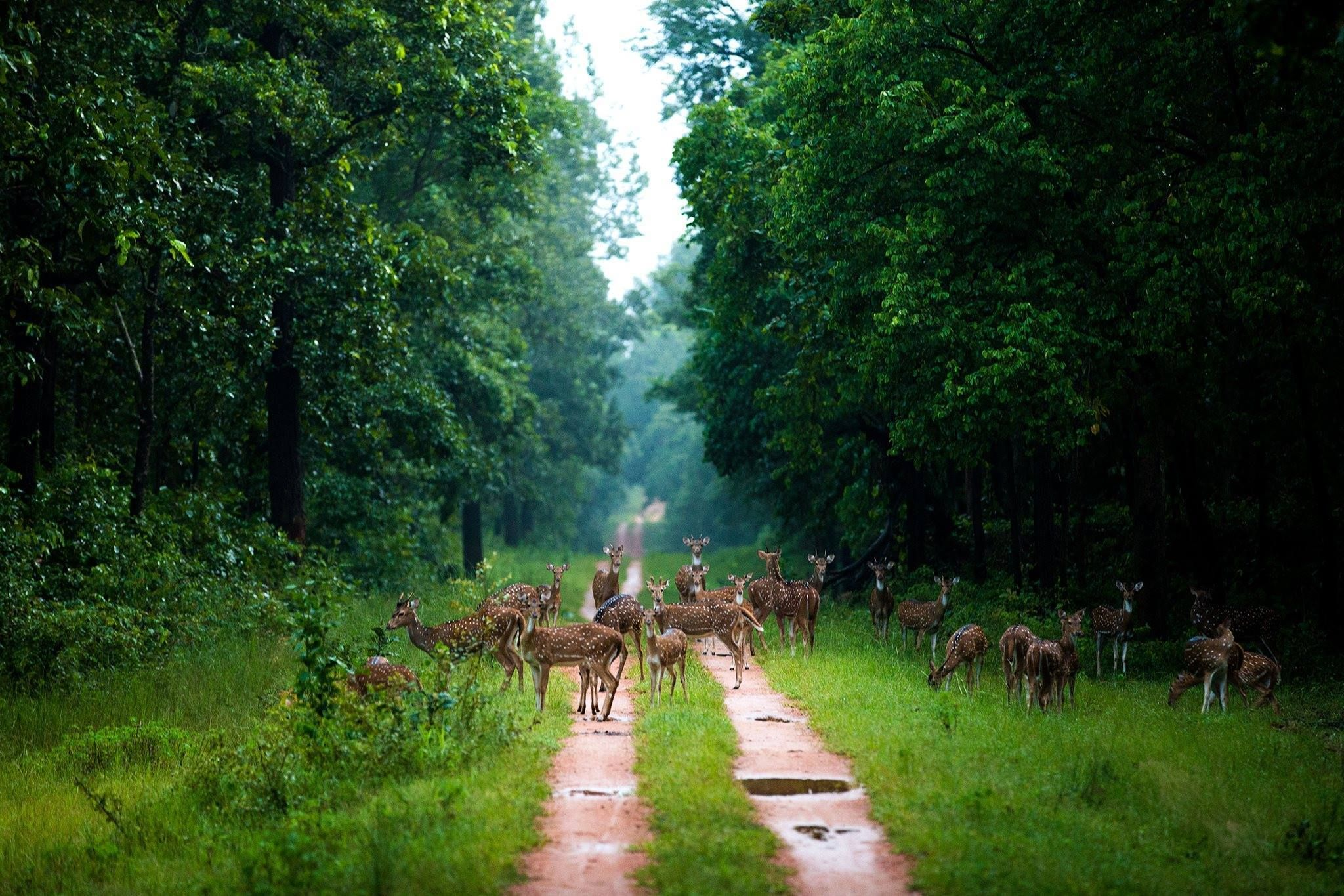 Barnawapara Wildlife Sanctuary is a nature lover's paradise. An exciting tour to #Barnawapara_Wildlife_Sanctuary assures a rewarding and #memorable #experience for all #wildlife enthusiasts, nature lovers, and bird lovers.